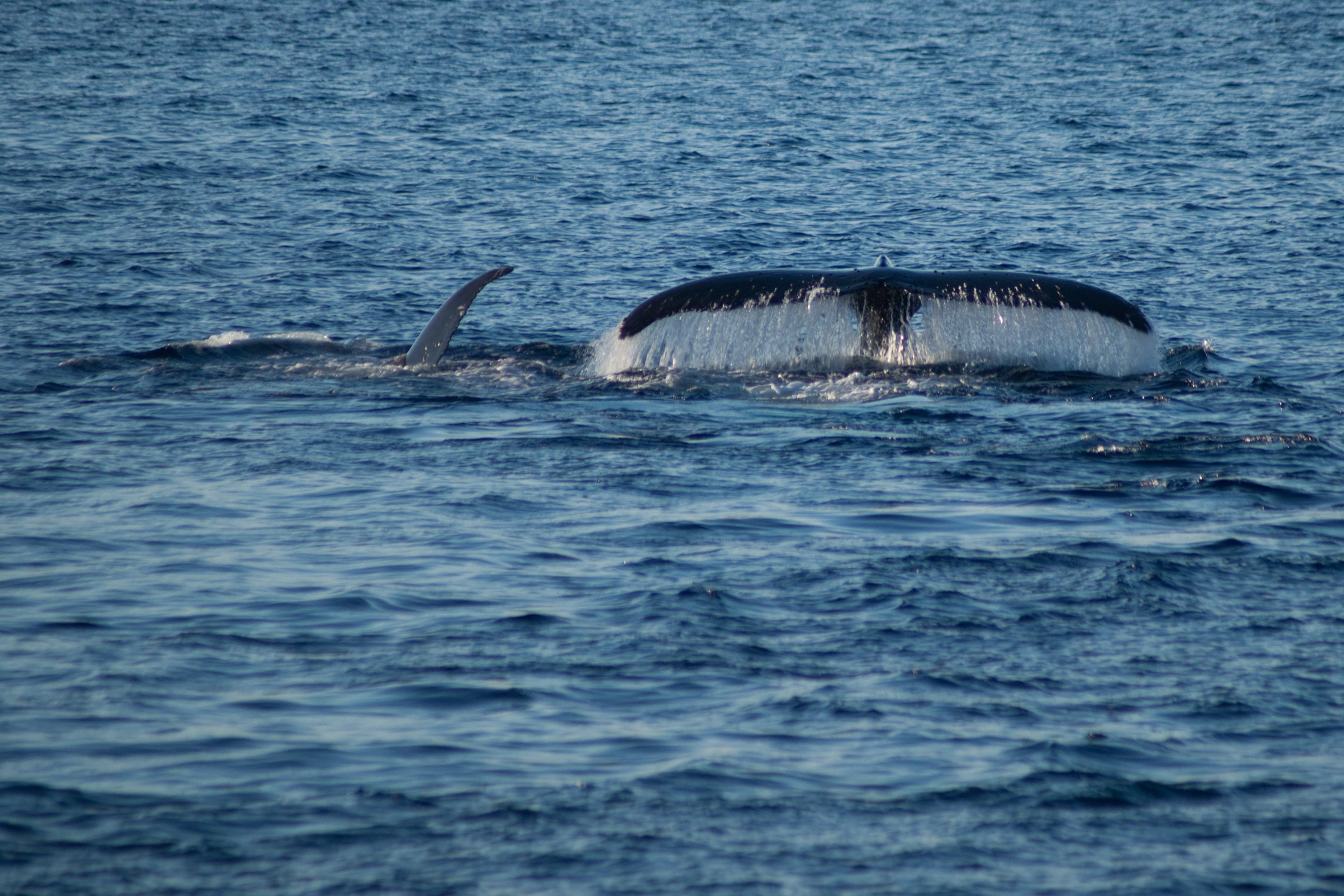 Cetacean monitoring during seismic survey